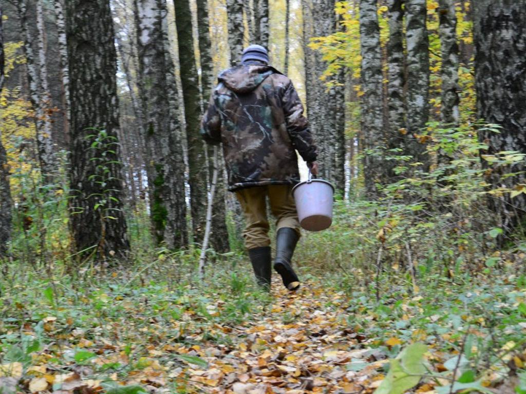 В Сочи обезвоженный грибник чудом уцелел в лесу